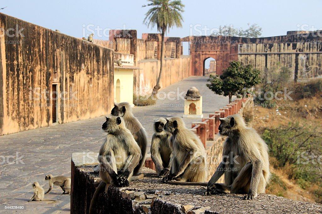 Monkeys Galore at Monument stock photo