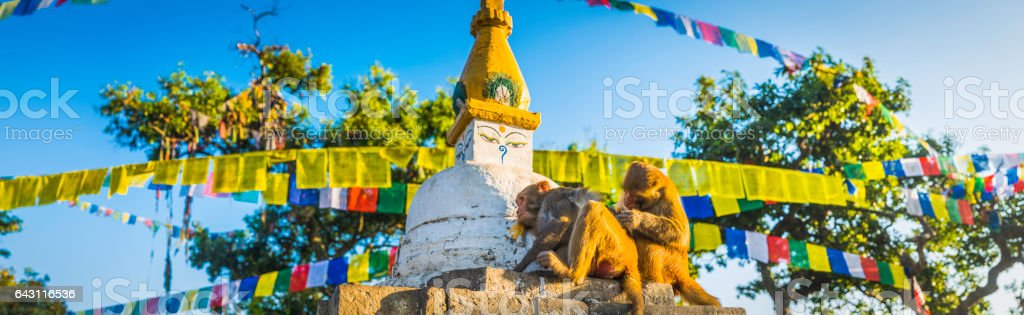 Monkeys grooming Buddhist stupa prayer flags Swayambhunath temple Kathmandu Nepal stock photo