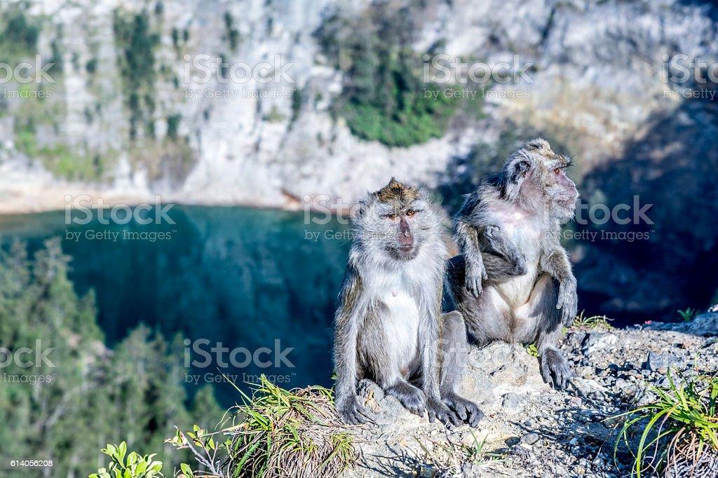 Monkeys in Kelimutu national park stock photo