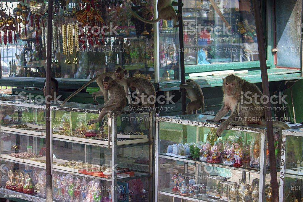 Monkeys in Lopburi stock photo