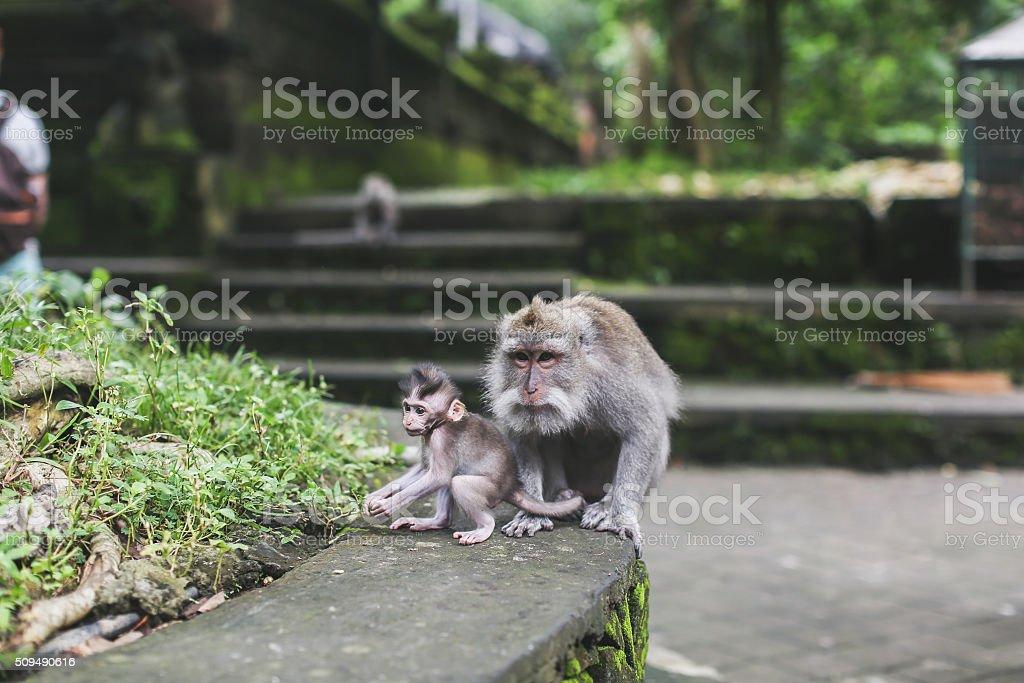 monkeys in the rainforest stock photo