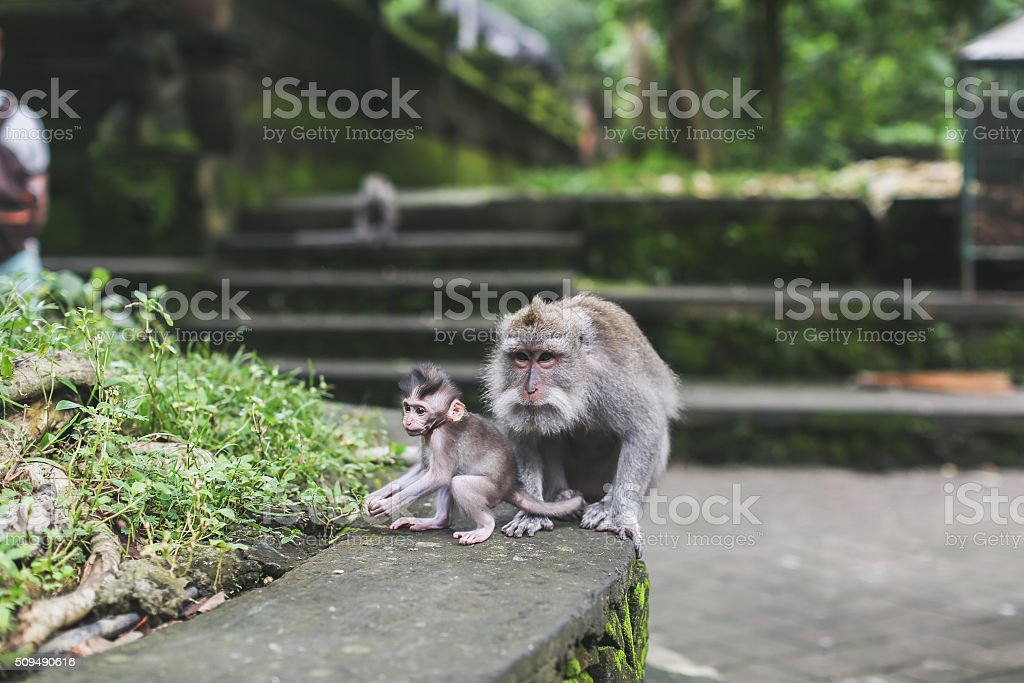 monkeys in the rainforest stock photo