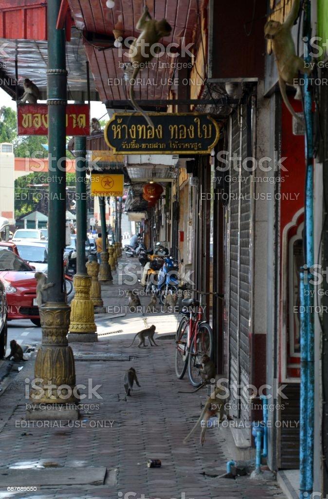 Monkeys on the sidewalks in Lop Buri, Thailand stock photo