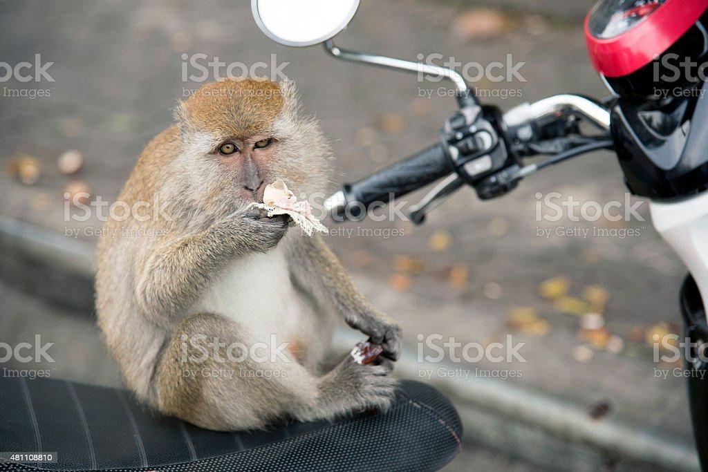monkeys stock photo