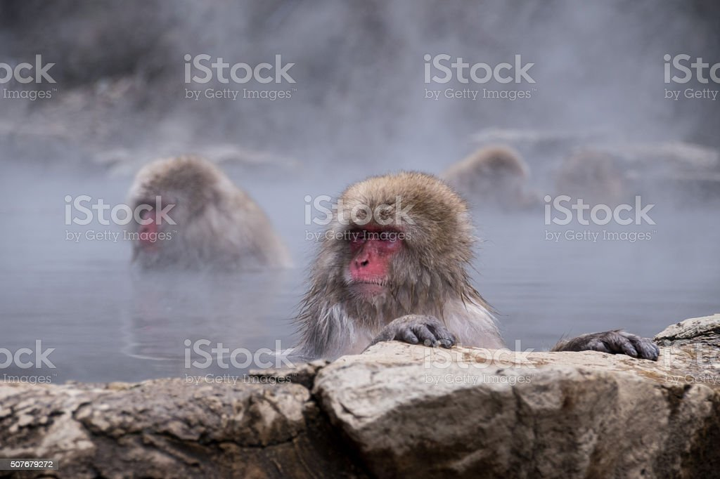 Monkeys relaxing in the hot spring stock photo