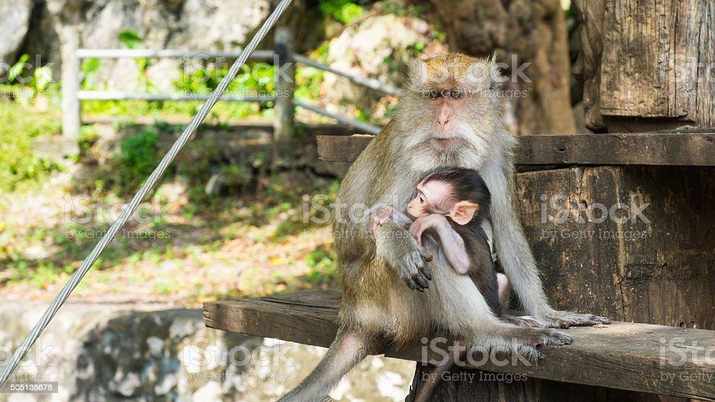 Affen sitzt auf der Treppe, Reinheit der Liebe Lizenzfreies stock-foto
