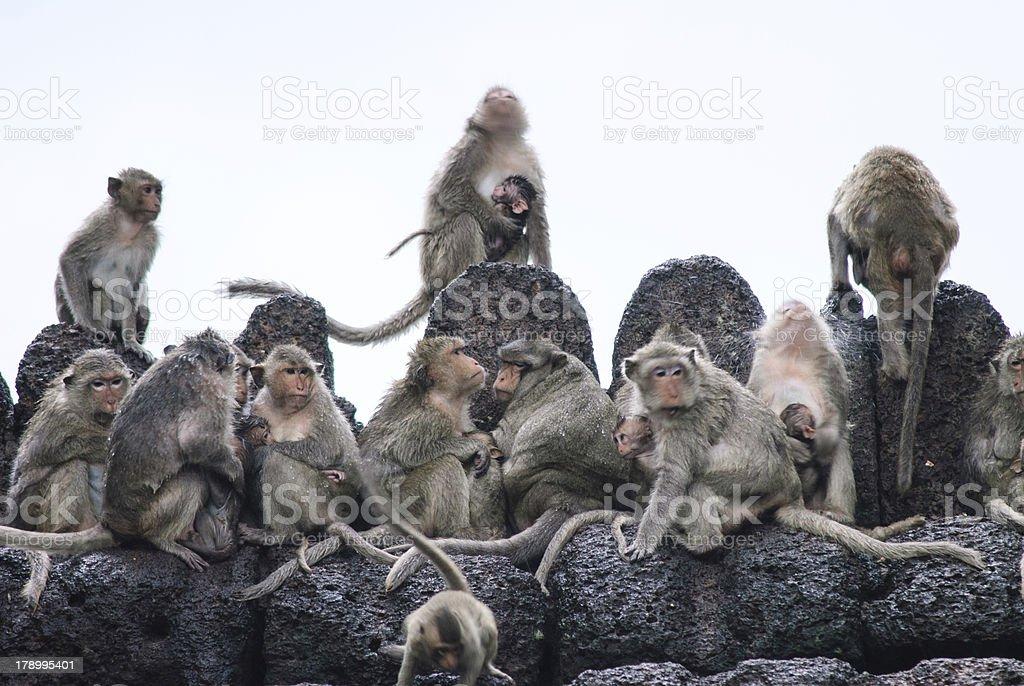 Monkeys sleep over a temple in Lopburi, thailand stock photo