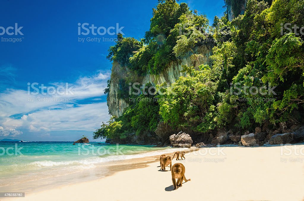 Monkeys waiting for food in Monkey Beach, Thailand stock photo