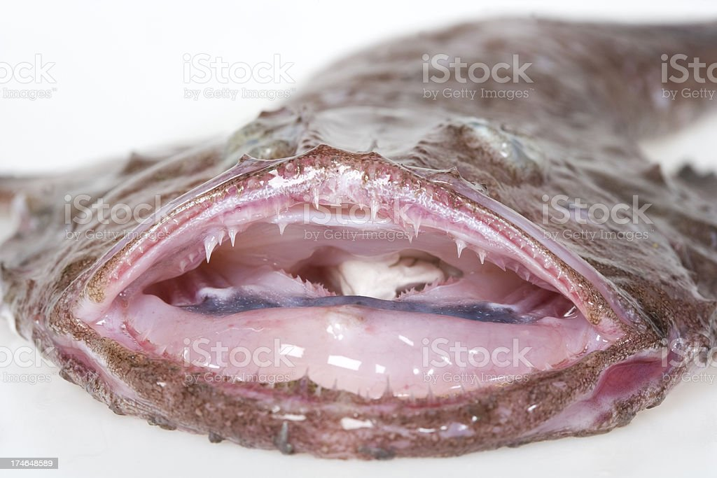 monkfish with mouth open royalty-free stock photo