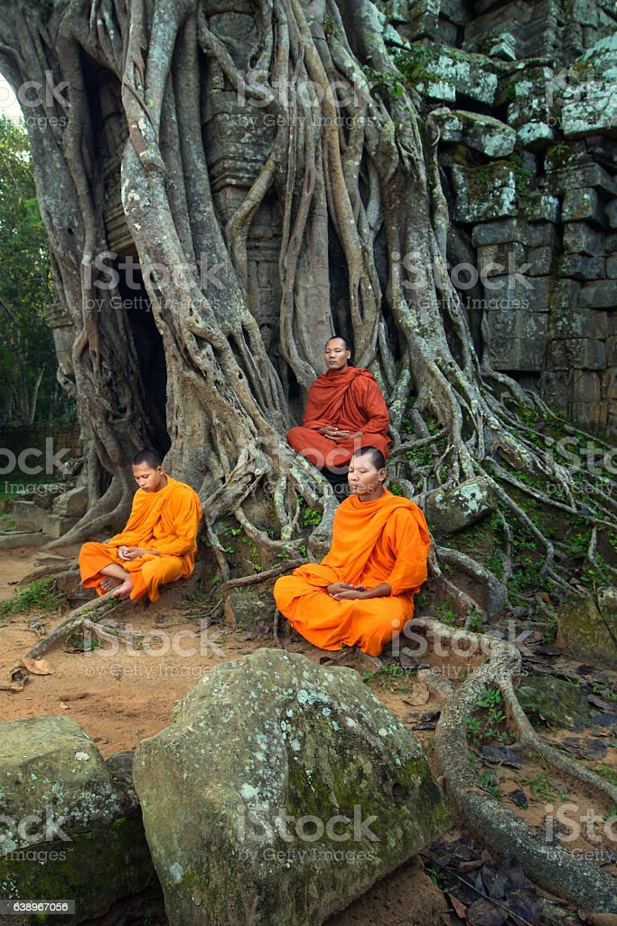 Monks meditating among tangled roots stock photo