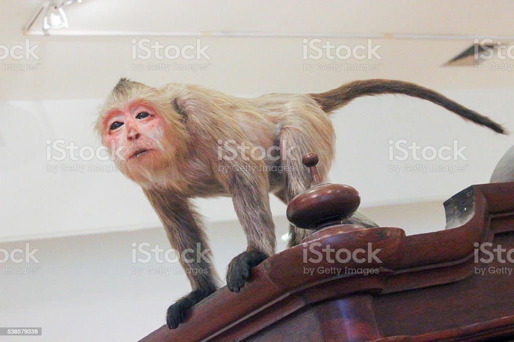 Monky on top stock photo