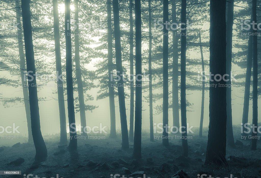 mono foggy trees stock photo