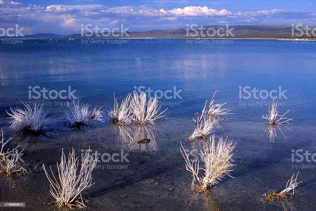 Mono Lake and Dried Grasses stock photo