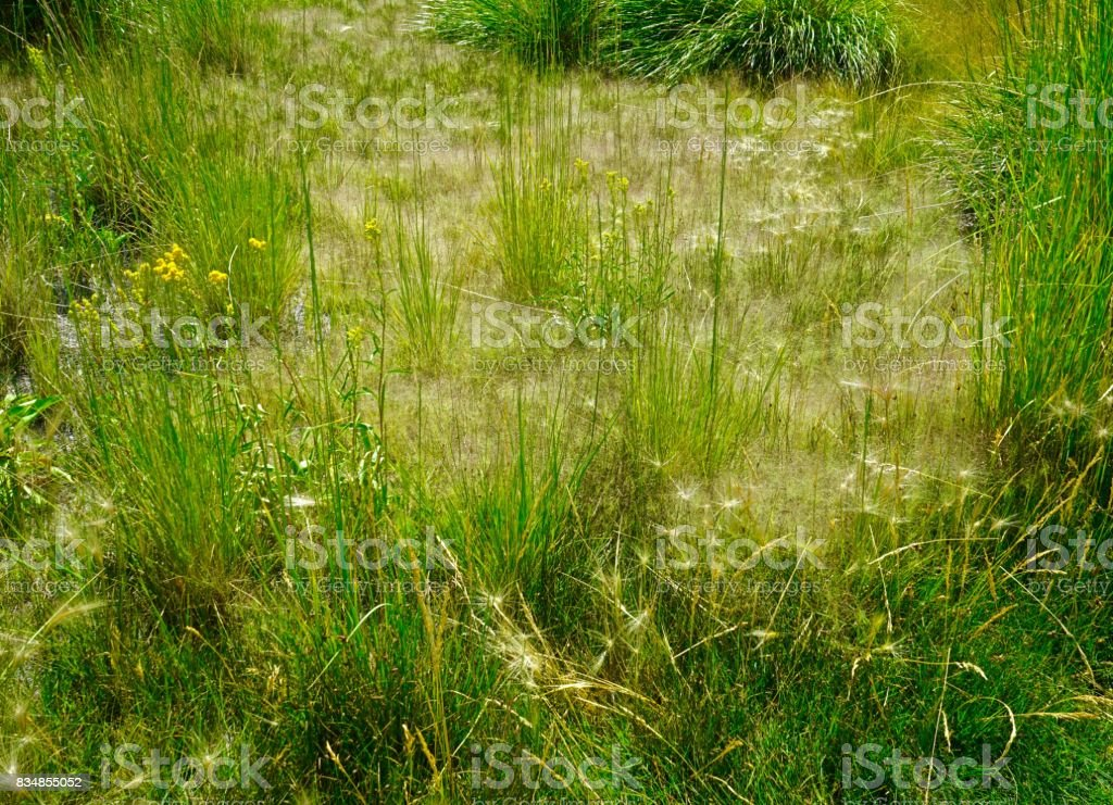 Mono Lake Grass stock photo