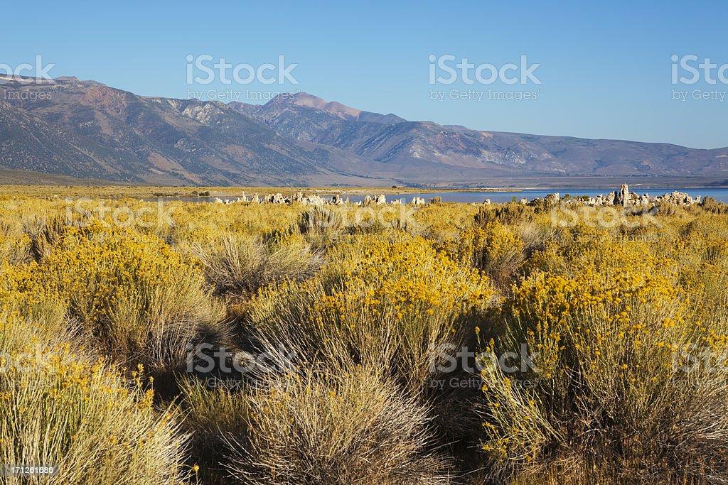 Mono Lake landscape royalty-free stock photo