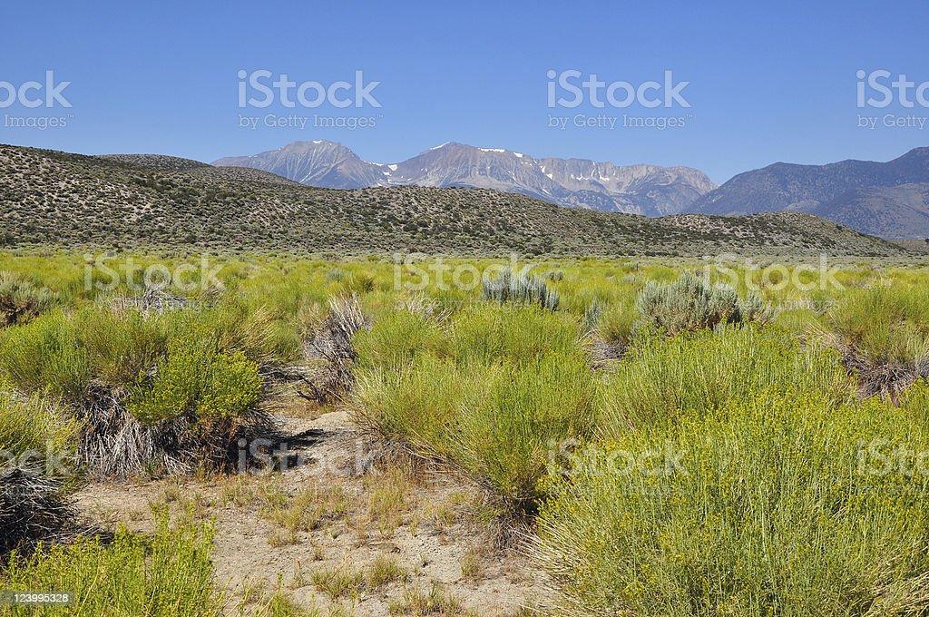 Mono Lake royalty-free stock photo