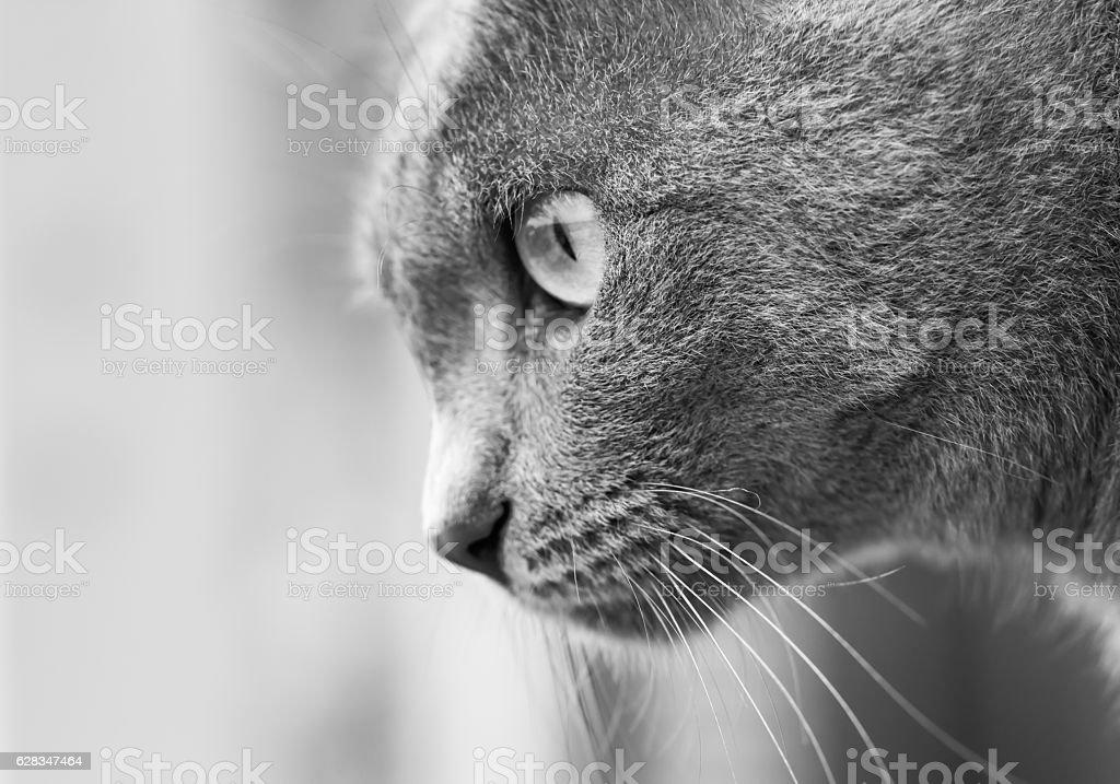 monochrome cat stock photo