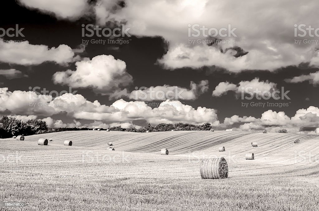 Monochrome curvy barley field with straw bales and cloudy sky royalty-free stock photo