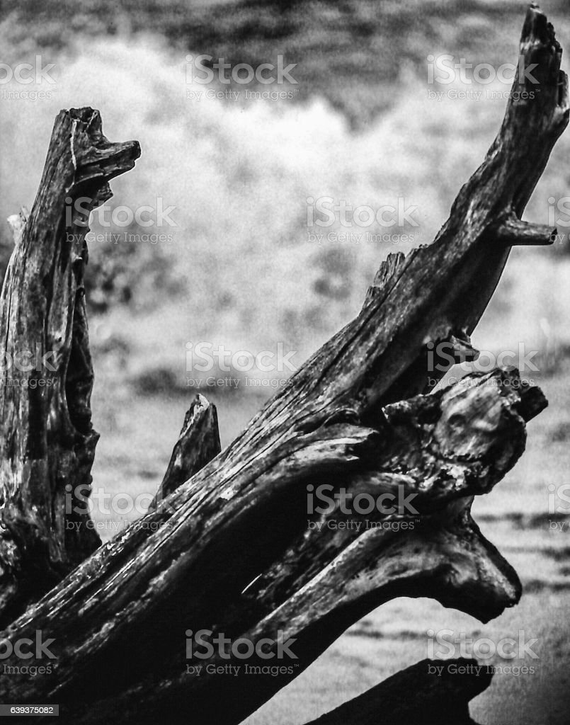 Monochrome Driftwood in Pounding Surf stock photo