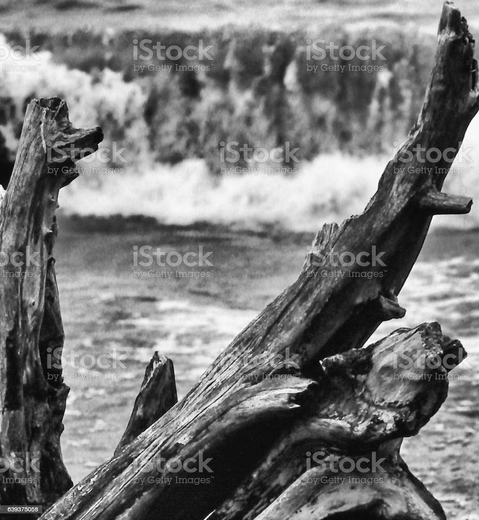 Monochrome Driftwood worn by Pounding Surf stock photo