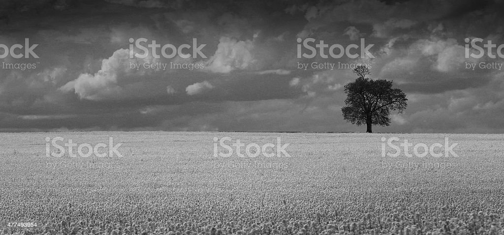 Monochrome Field stock photo