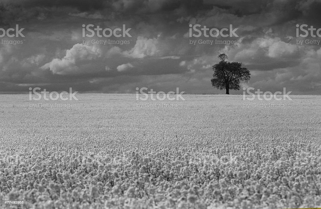 Monochrome Filed stock photo