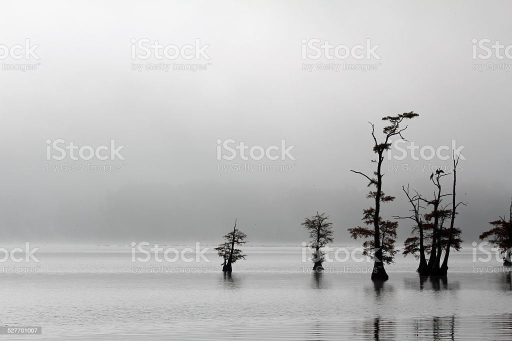 Monochrome landscape on Reelfoot Lake stock photo