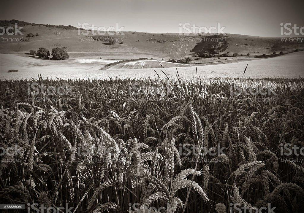 Monochrome Sussex stock photo