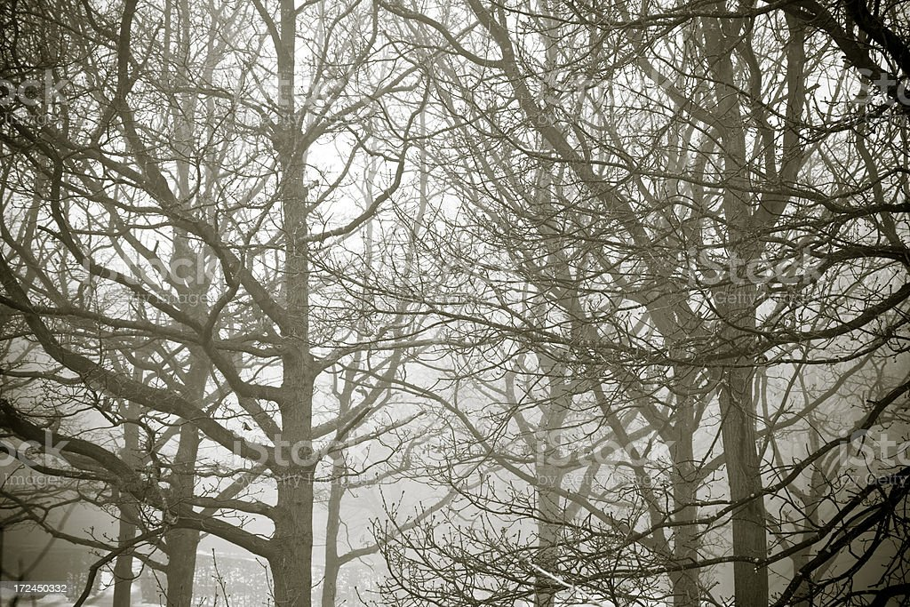 Monochrome Winter royalty-free stock photo