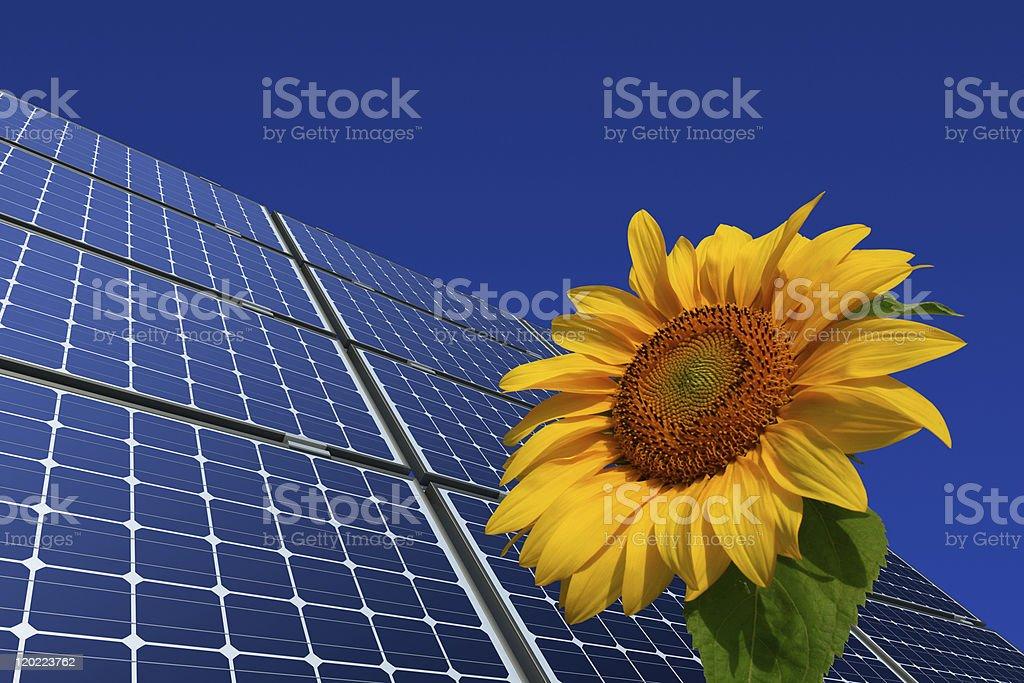 Monokristalline Solarmodule und Sonnenblume vor blauem Hintergrund stock photo