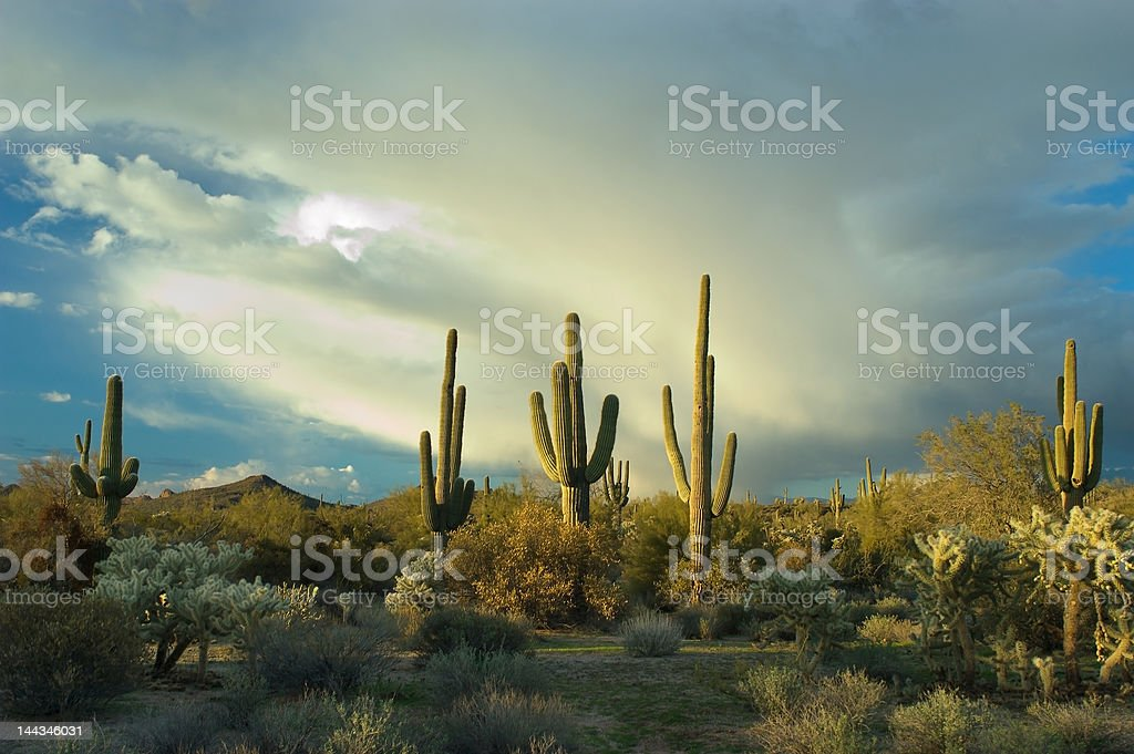 Monsoon clouds build over Sonoran Desert royalty-free stock photo