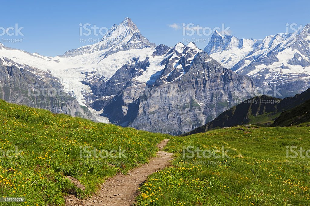 Montain summer royalty-free stock photo