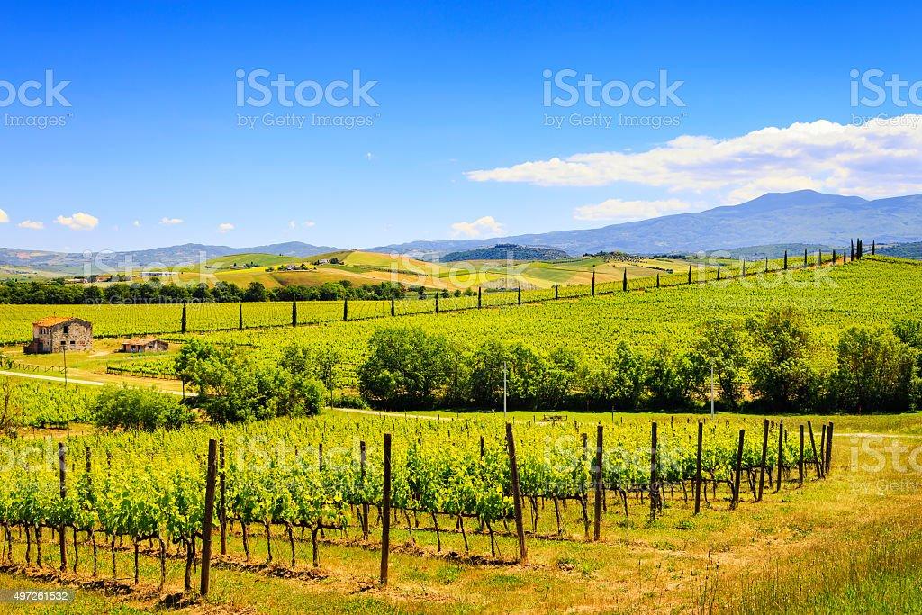 Montalcino, vineyard, cypress trees and old farm. Tuscany, Italy stock photo
