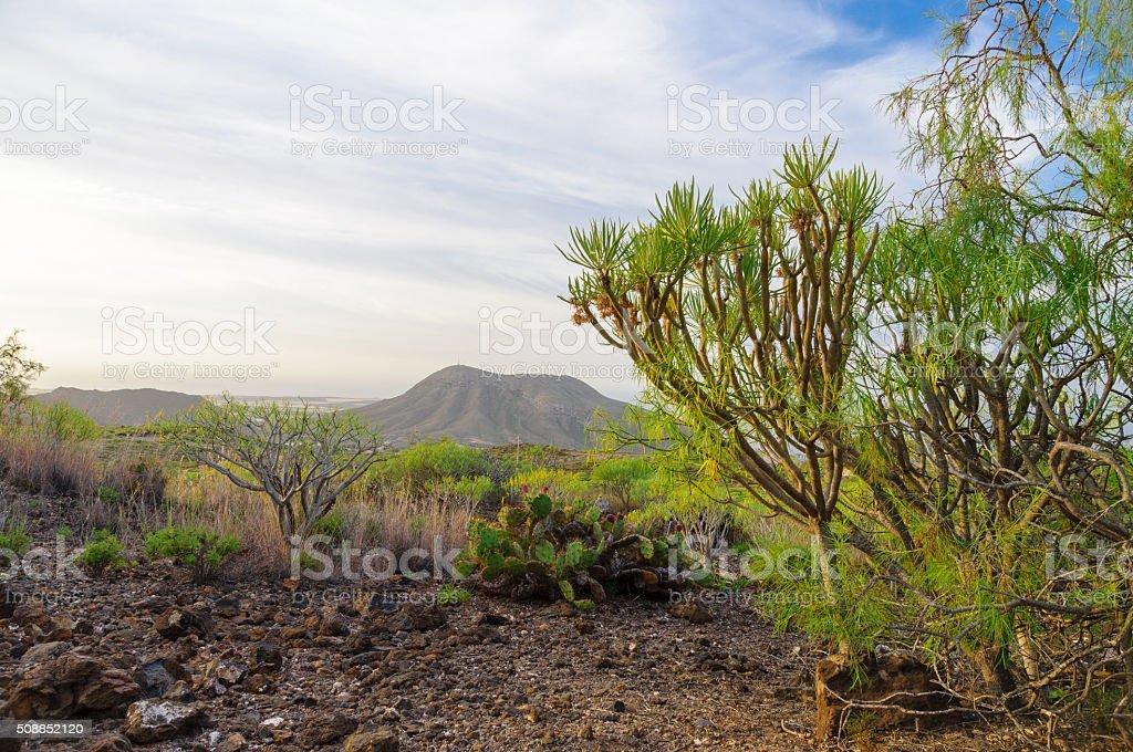 Montana de Guaza, Tenerife, Spain stock photo