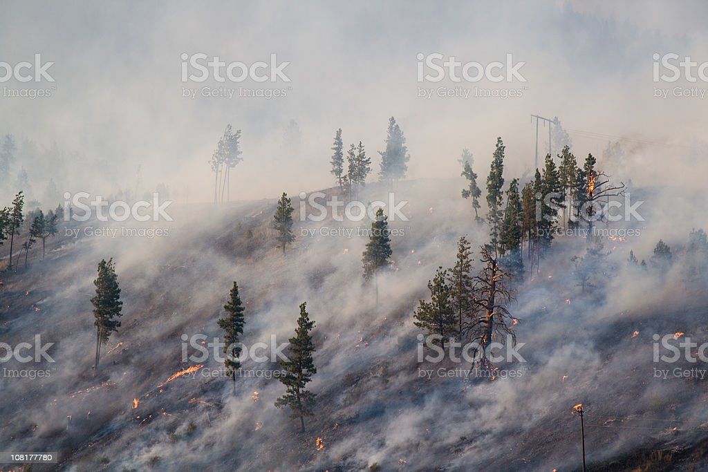 Montana Forest Fire 2007 stock photo