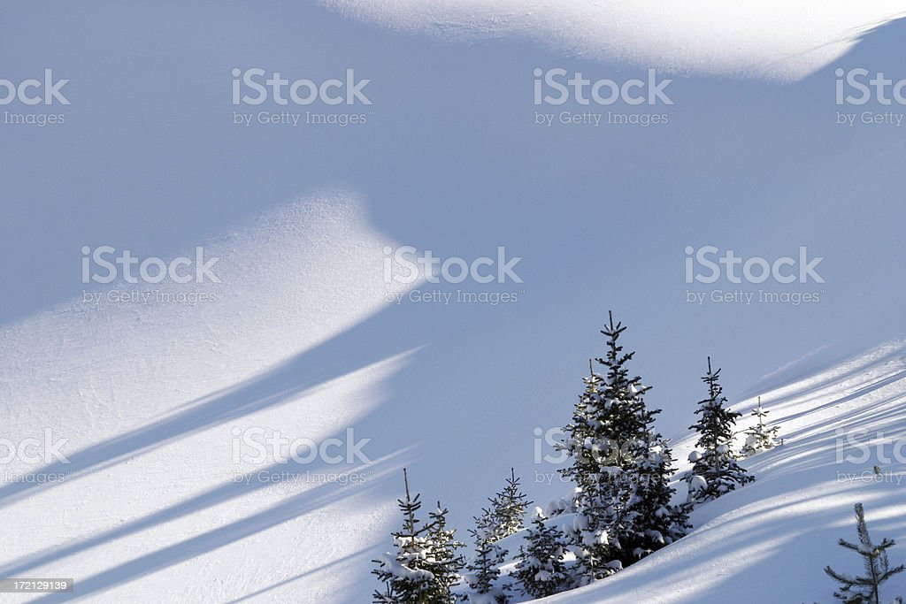 Montana Snow and Pine Trees stock photo