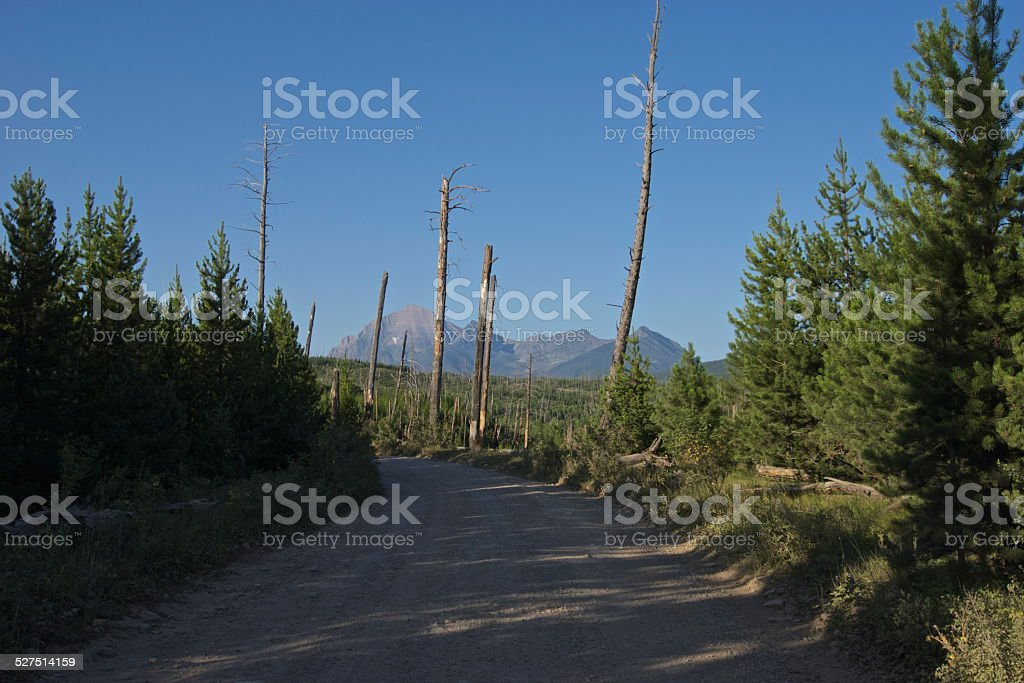 Montana Wolf Road stock photo