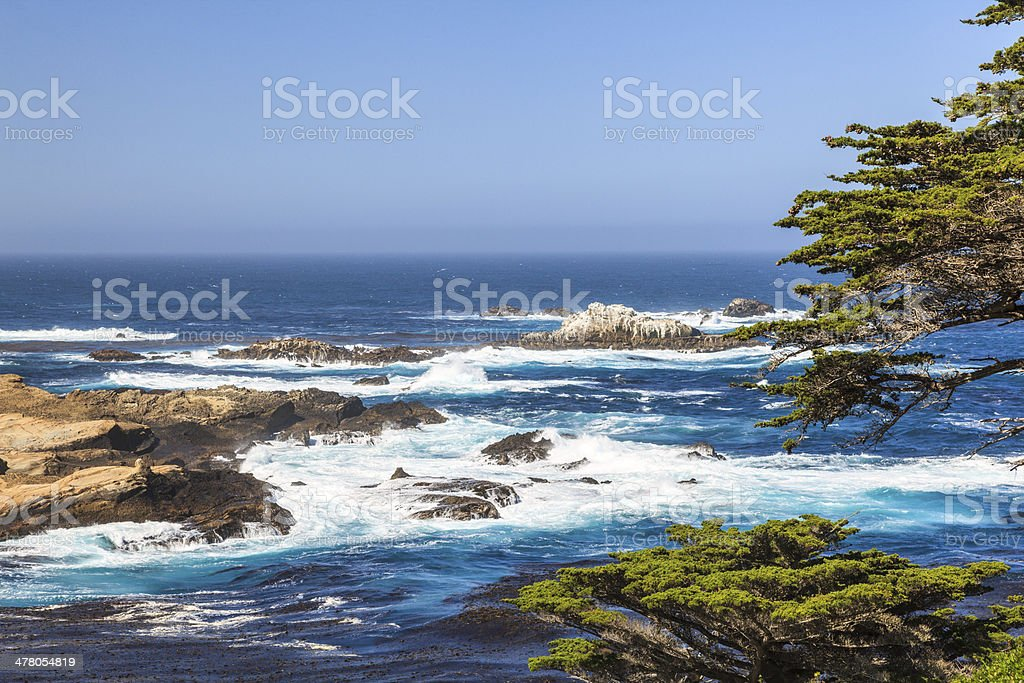 Monterey Cypress and Pacific waves, California stock photo