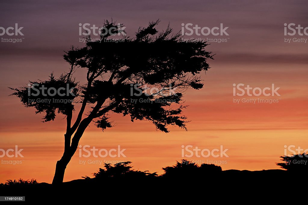 Monterey sunrise royalty-free stock photo