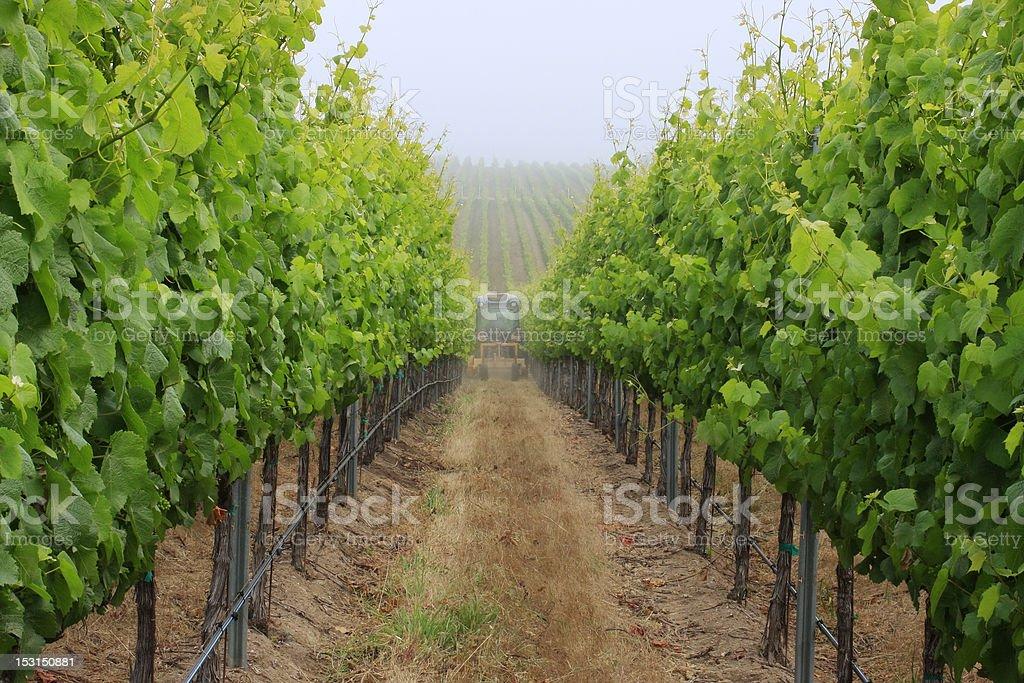 Monterey Vineyard stock photo