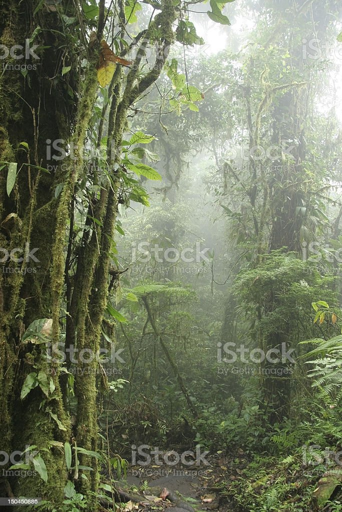 Monteverde Cloud Forest - Costa Rica royalty-free stock photo
