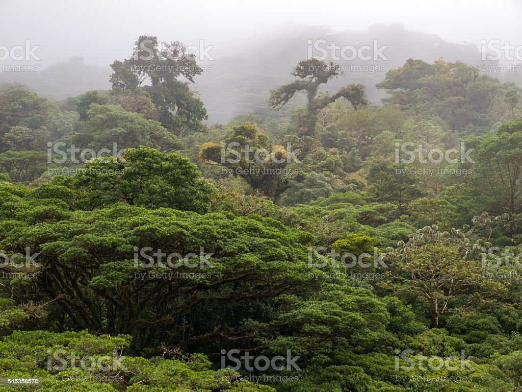 Monteverde Cloud Forest in Costa Rica stock photo