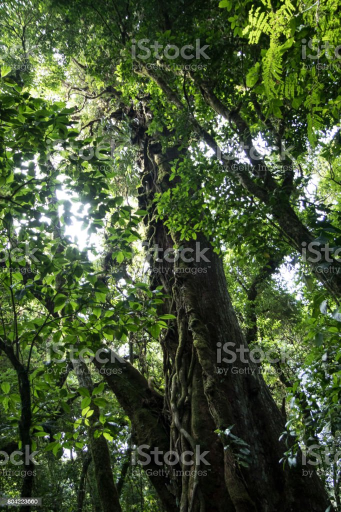 Monteverde cloud forest reserve in Costa Rica stock photo