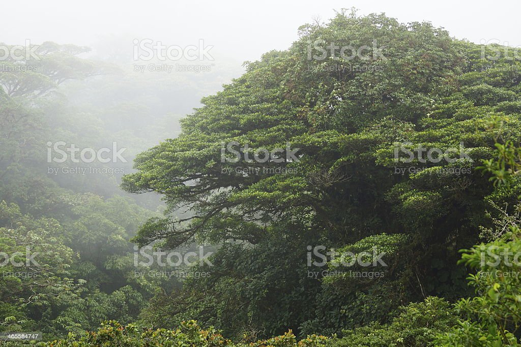 Monteverde cloud forest reserve stock photo