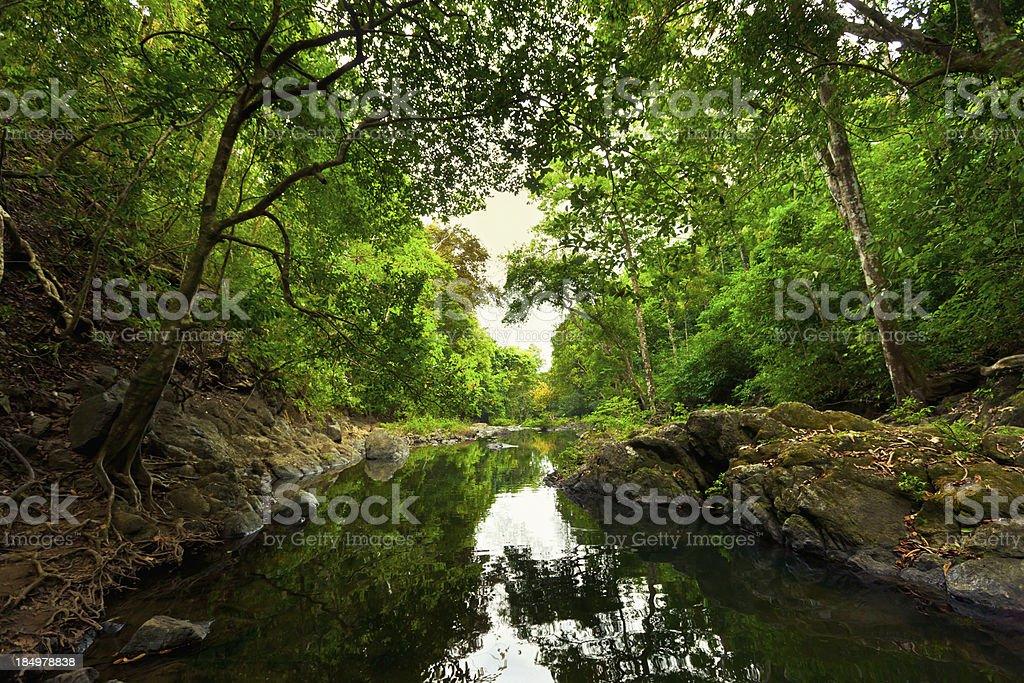 Montezuma Rainforest Costa Rica stock photo