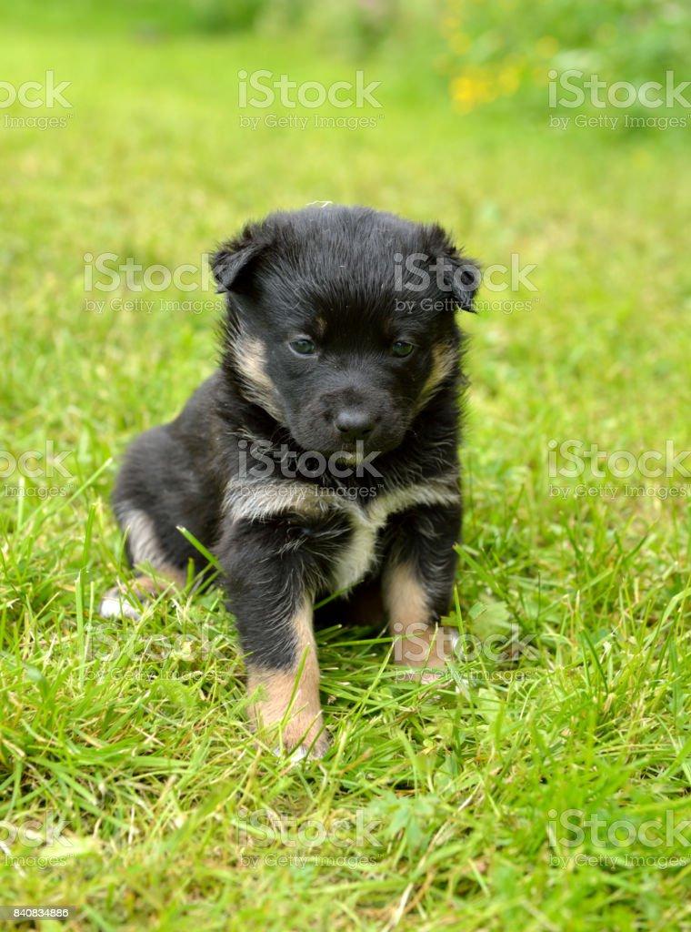 Monthly puppy stock photo