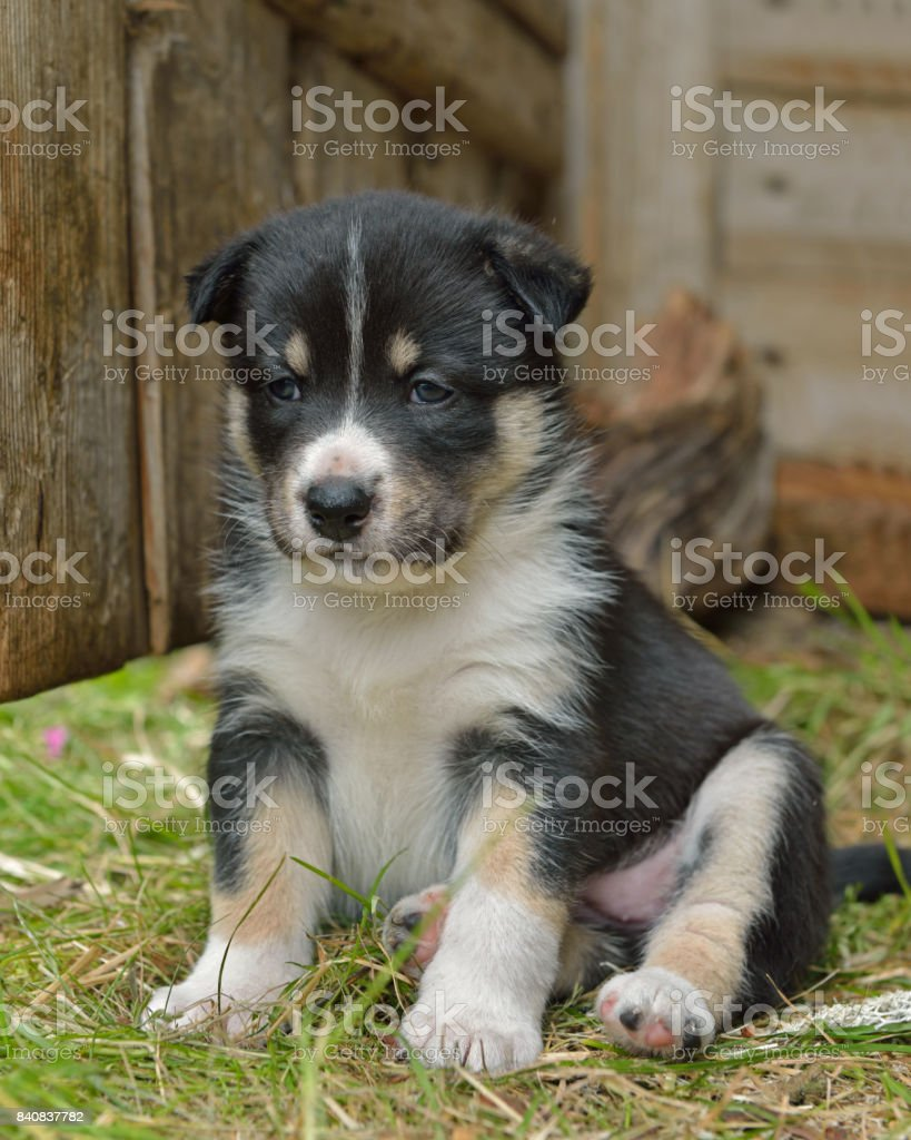 Month-old puppy stock photo