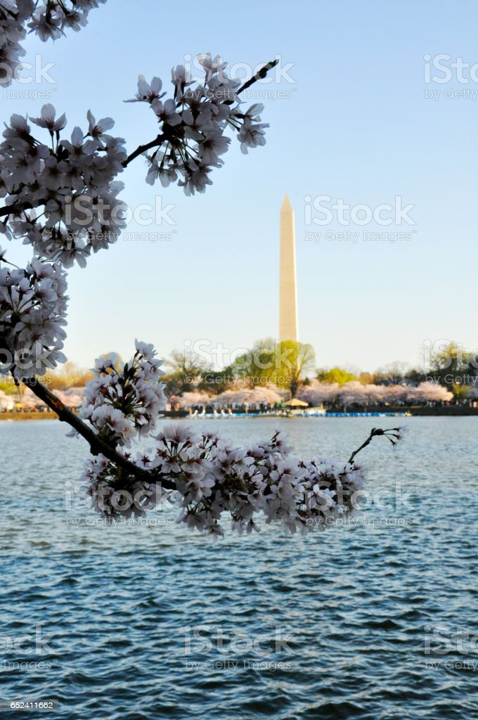 Monument with cherry blossoms stock photo
