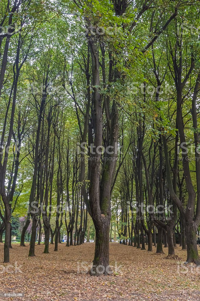 Monza Park (Parco di Monza), Monza, Lonbardy, Northers Italy stock photo
