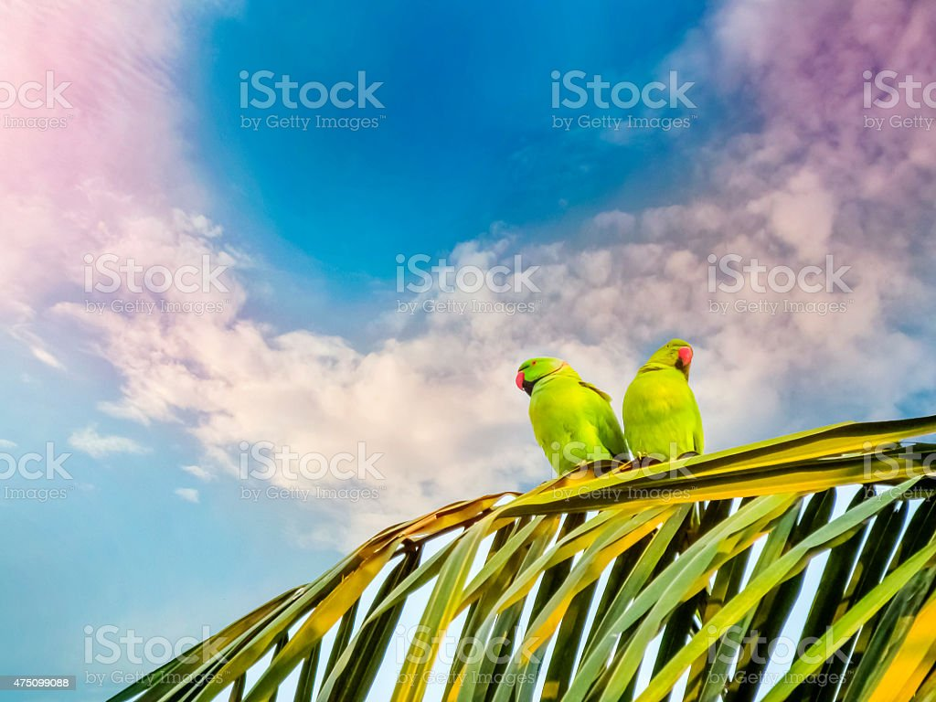 Mood or emotion of the Parrots not to love stock photo